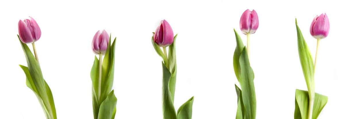 Wir unterstreichen Ihre natürliche Schönheit